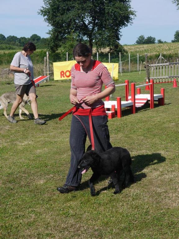 Ecole du chien - 20 juin 2015 - 3