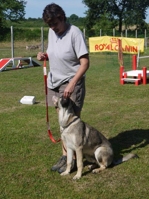 Ecole du chien - 20 juin 2015 - 4