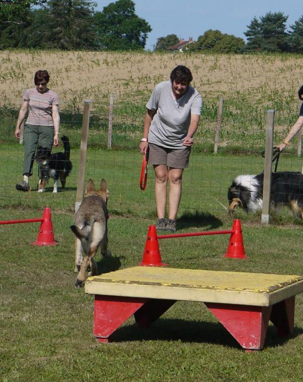 Ecole du chien - 20 juin 2015 - 8